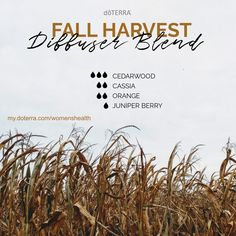 Bring that fun fall feeling into your home with these amazing oil blends! Smells soooo good! my.doterra.com/womenshealth