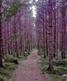 pretty forests remind me of fairy tales