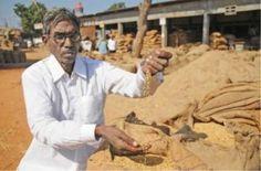 एचएमटी (HMT) धान और एक बुजुर्ग किसान के मान्यता का संघर्ष...