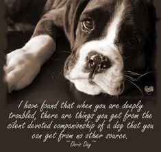 Dog Quotes, Animal Quotes, Most Popular Quotes, Old Dogs, Great Words, Boxer Dogs, Cool Pets, Dog Accessories, Dog Care