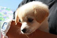 adorable, cute, dog, photography