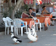 Local cafe and wildife, Akyarlar