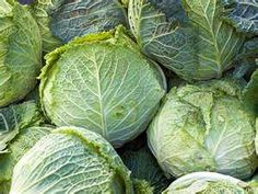 Cabbage promotes natural detoxification in the liver. Benefits include treatment of constipation, stomach ulcers, headache, excess weight, skin disorders, eczema, jaundice, scurvy, rheumatism, arthritis, gout, eye disorders, heart diseases, ageing & Alzheimer's disease. It is high in sulfur & iodine. Sulphur is a very useful nutrient as it fights infections. Rich in iodine helps in proper functioning of the brain & the nervous system, apart from keeping the endocrinal glands in proper…