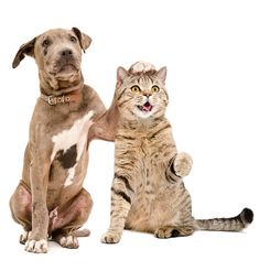 Bengal Cat For Sale, Cats For Sale, Os Pets, Cute Cats, Funny Cats, Pet Branding, Movie Love Quotes, Cat Sitting, Cool Things To Make