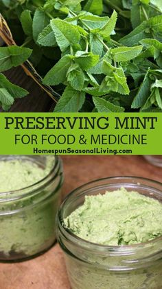 Mint is an incredibly prolific even invasive herb in the garden. Left unattended it will take over but when properly managed and thinned it can be a wonderful bounty. Spices And Herbs, Fresh Herbs, Natural Medicine, Herbal Medicine, Herbal Remedies, Natural Remedies, Natural Treatments, Mint Plants, Wild Edibles