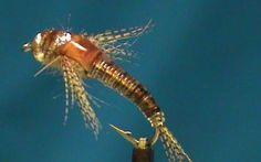 Fly Tying a Beadhead UV Resin Mayfly Nymph with Jim Misiura