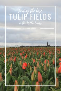 Finding the Best Tulip Fields In the Netherlands | A guide to visiting the Keukenhof and the tulip fields in Lisse.
