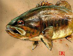 drawing flies 365: Drawing Fish 52_26 Smallmouth (Bronzeback) Bass