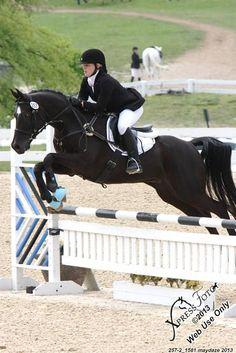 Arabian Sport Horses