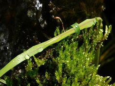 #quebec #quebecpromos #macro_perfection#vscomacro#nature_brillance#nikon#macromood#macro_vision#macrophotography#charlevoix #moncharlevoix#explorecanada #macromood #macro_brillance #vscocam#explorequebec#quebecoriginal#quebecregion #quebeccity #l4l #tb #tagsforlike#instagood#picoftheday#green#naturelovers#flowerstagram by justine_simard_22