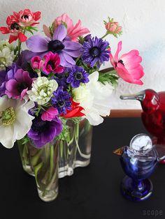 Alvar Aalto and Birds by Toikka Queen Annes Lace, Alvar Aalto, Dream Decor, Green Flowers, Flower Vases, Still Life, Glass Vase, Flora, Succulents