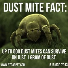 Are Dust Mites and Germs Causing Your Sickness? Allergy Shots, Friday Facts, Household Pests, A Typical, Allergy Testing, Allergy Relief, Bed Bugs, Cleaning Services, Dust Mites