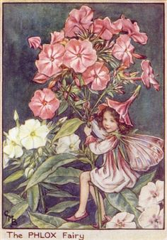 Illustration for the Phlox Fairy from Flower Fairies of the Garden Author / Illustrator Cicely Mary Barker Cicely Mary Barker, Elfen Fantasy, Fantasy Art, Flower Fairies, Fairies Garden, Phlox Flowers, Flowers Garden, Fairy Pictures, Vintage Fairies