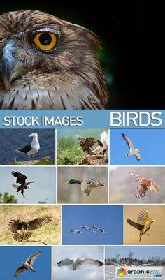 Stock Photos  Birds flying 25xJPG  stock images