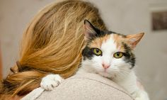 "Being called a ""crazy cat lady"" used to be a negative thing, usually reserved for single women with a house full of cats. But it turns out there are plenty of good reasons to actually embrace being a ""crazy cat person."" Where did that expression come from, anyway? According to NBC News: ""Besides medieval hysteria about …"