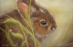 Original Pastel Miniature Young Hare Junger Hase Wildlife by Nature Art | eBay
