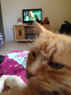 Rusty Watching Garfield