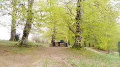 En el #CaminodeSantiago los descansos al abrigo de los árboles están a la orden del día. Así que a disfrutar del piscolabis!!!  www.caminodesantiagoreservas.com