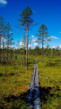 Salamajärvi National Park - Reppuretkiä: Puolimaratonin mittainen patikkaretki Salamajärvellä