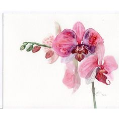 Orchid original watercolor, pink orchid flowers painting original ($88) ❤ liked on Polyvore featuring home, home decor, wall art, flowers, watercolor wall art, flower stem, watercolor painting, orchid painting and pink home decor