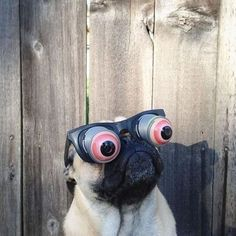 """Even with these goggles on, you're spectacular!"" 