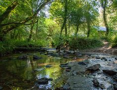 The peaceful stream at Deerpark #Cornwall and also the site of our famous Duck Race!  What's Onsite at Deerpark - Forest Holidays #ForestRetreat #UKgetaway