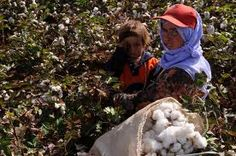 cotton-collector-worker-mother..