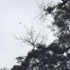 ++ free bird.