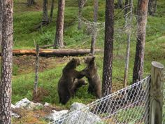 Bjørneparken i Flå