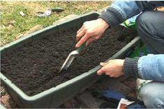 Home - Growing Wisdom Homestead Gardens, Victory Garden, Root Vegetables, Garden Tools, Garden Ideas, Plants, Gardening, Balconies, Homesteading