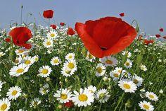 """Képtalálat a következőre: """"tavaszi virágok háttérképek"""""""