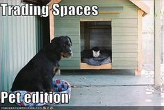 Trading spaces Pet edition Funny dog photo with captions