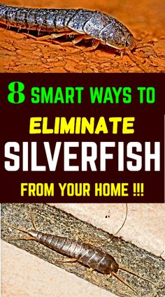 Silverfish or fish moths are mostly found in laundry rooms, kitchens, damp cabinets or cupboards, basements, and attics as they prefer cold, dark, and damp places. Use these methods to rid them from your home. #silverfish #fishmoths #cleaning #hacks #essentialoil #cleaninghacks #cleaningtips #homehacks #hometips #homeandgarden