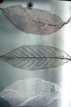 cool craft idea with leaves