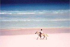 Harbour Island, what a wonderful pink beach! an island of bahamas #bahamas