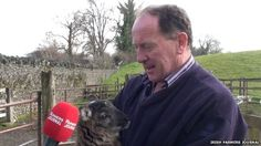 Farmer Paddy Murphy and his unnamed 'geep'.   A rare, hybrid animal that is part goat and part sheep has been born on a farm in the Republic of Ireland.