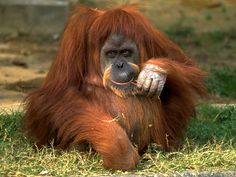 Really Cute Endangered Animals | The L Chat → Welcome Back → General Discussions → SNSD (Girls ...