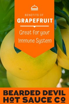 It's great for your immune system. Exhibit A of all that glorious nutrient density: grapefruits are a good source of vitamins A, C, and E a trifecta that works together to keep the immune system up. Spicy Sauce, Hot Sauce, Health Benefits Of Grapefruit, Fruit Sauce, Sources Of Vitamin A, Immune System, Exhibit, Vitamins, Stuffed Peppers