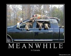 Don't laugh, I saw some elk do this once ;)