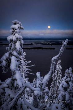 Photo by Asko Kuittinen Landscape Photography, Nature Photography, Dark Tree, Winter Magic, Seasons Of The Year, Pine Forest, Winter Beauty, Winter Time, Winter Moon