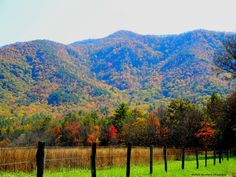 Photo I took while visiting Gatlinburg, TN. This is in Cades Cove.