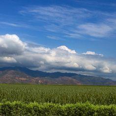 Caña/Sugarcane | Colombia