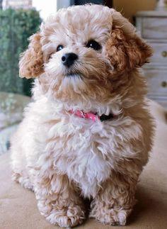 Top 100 puppies of 2012
