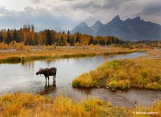 Schwabacher'S Landing #photography #photo http://www.outdoorphotographer.com/on-location/favorite-places/schwabachers-landing/