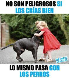 Si los educas mal también tus hijos serán peligrosos. Antes de juzgar recuerda que la domesticación animal es nuestra responsabilidad. I Love Dogs, Cute Dogs, Animals And Pets, Cute Animals, Mexican Memes, Spanish Memes, Baby Puppies, Barbie, Pitbulls