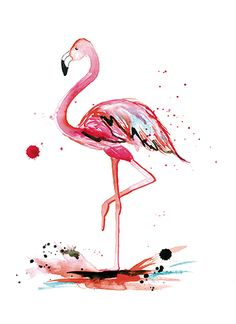 art prints - Pink Flamingo by Kelsey McNatt