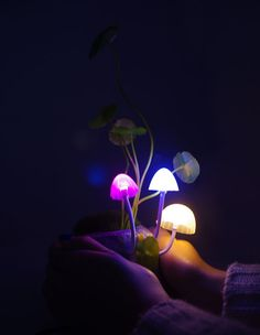 INFMETRY:: Avatar Mushroom Colorful Night Light