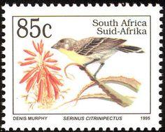 Lemon-breasted Canary (Serinus citrinipectus)