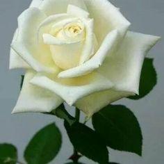 Frases criadas, poesias paridas... retratos do coração, recortes do meu cotidiano. Minha vida em abundância, graças a Deus! #poesia #com #dia #bom #bom dia com poesia #palavras #frases #poesias #cotidiano #vida #sentimentos #sensacoes #encantamento