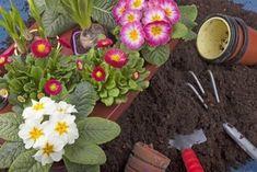 Χρήσεις για το υπεροξείδιο του υδρογόνου που πρέπει να γνωρίζετε Succulents, Plants, Hampers, Compost, Succulent Plants, Plant, Planets